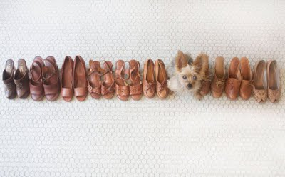 Shoedoggie