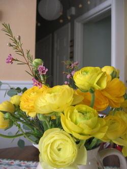 Ranunculusside_2
